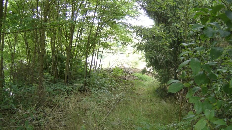 La ligne entre dans le petit bosquet juste après le PN...