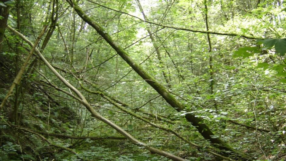 Il était impossible de continuer plus loin à cause de la végétation sauvage. On aperçoit cependant encore le ballaste au sol...