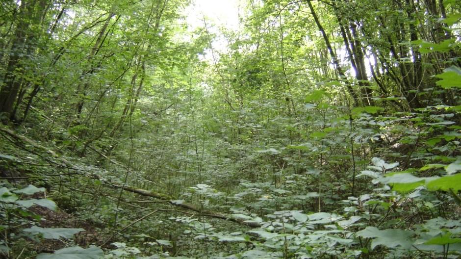 La forêt, la forêt, la forêt...!