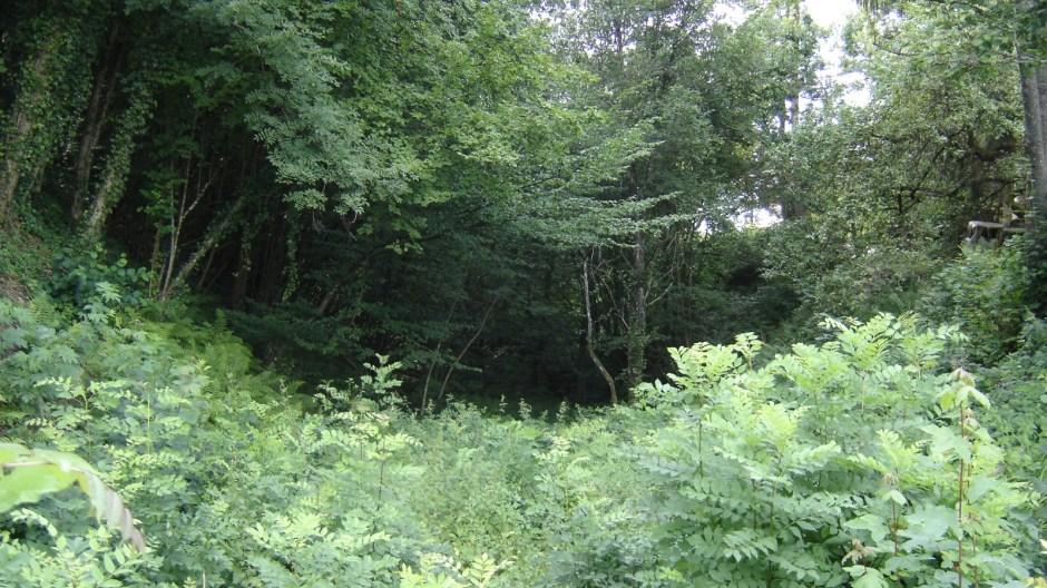 La ligne entamait une légère descente avec de part et d'autre des murs de soutènement en pierres. Aujourd'hui c'est une forêt dense mais on devine toujours l'emprise ferroviaire.
