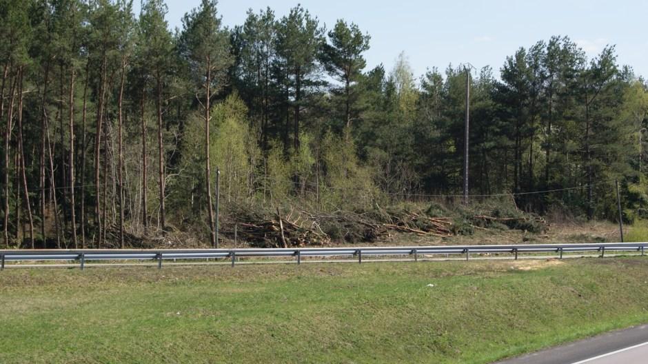 Travaux forestiers sur la RN57 à Thaon-les-Vosges.